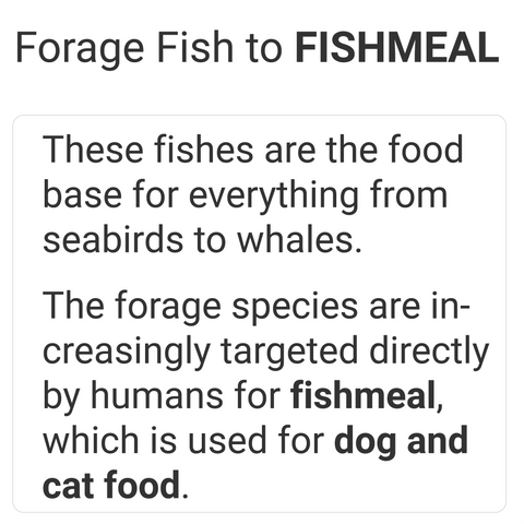 forage fish is used for fishmeal for dog and cat food