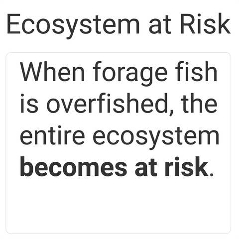 overfishing puts ecosystem at risk and hence people use vegan dog food or vegan cat food
