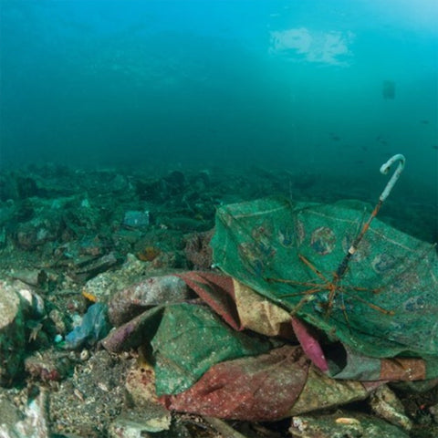 empty dying oceans due to overfishing of forage species