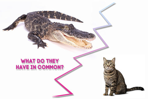 studies show that both alligators and cats can be fed a plant-based diet
