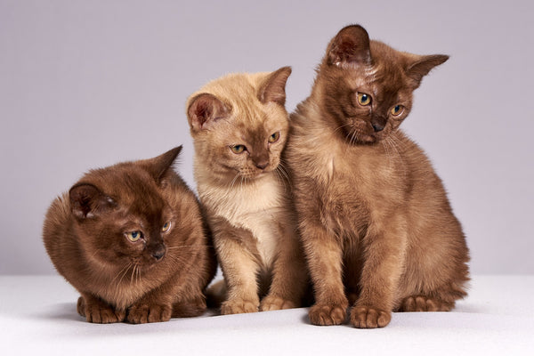 Story about 3 Cats -  - Test a Tasty