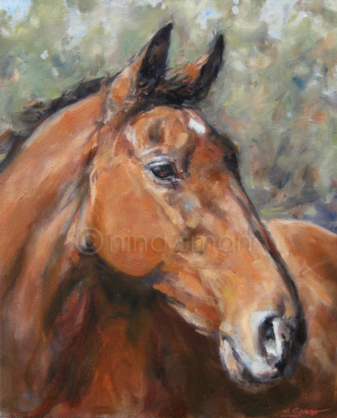 "Horse head portrait in oil paint. Beautiful bay Thoroughbred. Title: Portrait of Chip  Commissioned artwork  Original oil painting by Nina Smart. Signed Lower Right  Dimensions: 20 x 16"" (50 x 40cm)  Date: 2016   Stretched canvas"