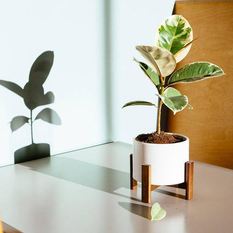 Sonder Planter Pot - Fossil White