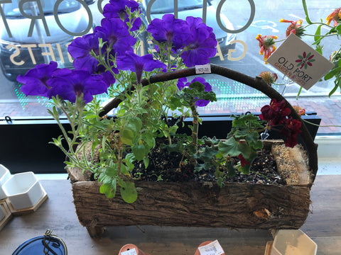 Pansy and geranium in log planter with handle