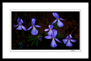 """Birds Foot Violet"" Light Painting Photography Framed"