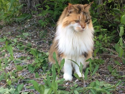 Catsitting Too! It's Not Just About the Dogs!! Get Started Petsitting