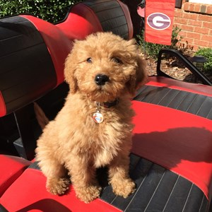 Great Dogsitter Recommended Referrals Southeast US Dogsitting Georgia Tennessee Kentucky North Carolina