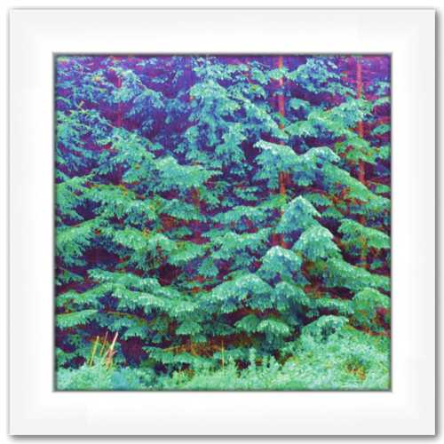Forever Happy Free ☼ Alterations Most True {Art Print} Dawn Richerson Magical Forest Fairy Forest