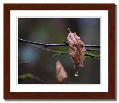 Shared Sorrow ☼ Soul of Nature {Photo Print} Nature Photo Dawn Richerson Photography Soul of France Vineyard