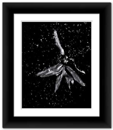 Angel of the Starry Night Framed Photo Print Black and White