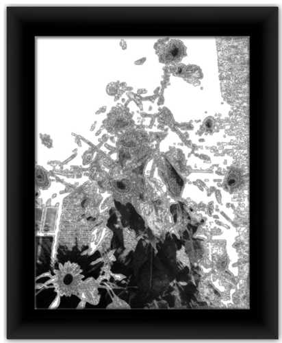 Sunflowers in Winter Alterations Most True Black & White Minimal Art Print
