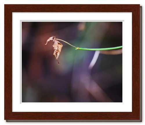 Be the Dancing Fool ☼ Soul of Nature {Photo Print} Out on a Limb Nature Photo Dawn Richerson Photography