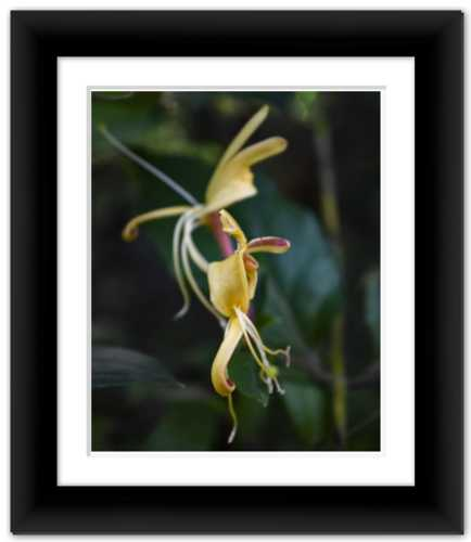 Delicate Dancer - Life & Art in the Time of Coronavirus - Framed Photo Print