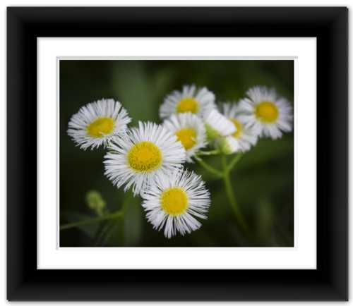 Focus on the Finer Things - Life & Art in the Time of Coronavirus - Photo Print