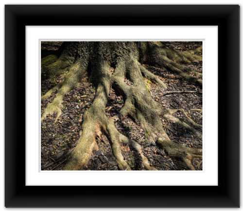 Rooted in Community, Belonging to One Tree of Life Dawn Richerson Photograph Nature Tree Photo