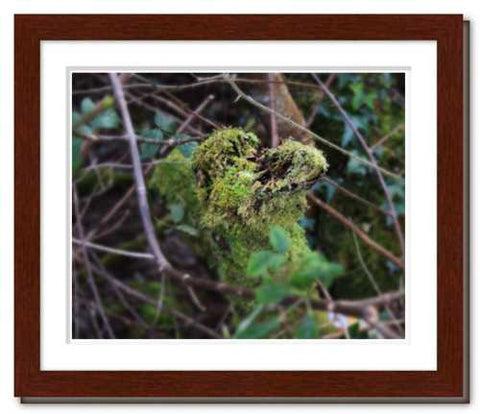 This Kiss ☼ Nature of Love & Soul of Nature {Photo Print} Valentine's Day Passionate Embrace Nature of Love Photograph