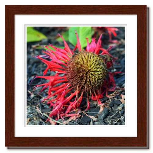 Not Afraid to Fall ☼ Soul of Nature {Photo Print} Flower Photo Red Yellow Forest Floor
