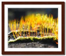 Load image into Gallery viewer, Growing Golden ☼ Soul of Nature {Photo Print} Photo Print New Dawn Studios 11x14 Framed