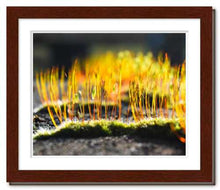 Load image into Gallery viewer, Growing Golden ☼ Soul of Nature {Photo Print} Photo Print New Dawn Studios 8x10 Framed
