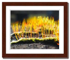 Growing Golden ☼ Soul of Nature {Photo Print} Photo Print New Dawn Studios 8x10 Framed