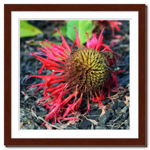 Not Afraid to Fall ☼ Soul of Nature {Photo Print} Photo Print New Dawn Studios 12x12 Framed
