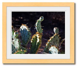 Present to Our Prickly Past ☼ Soul of Nature {Photo Print} Photo Print New Dawn Studios 8x10 Framed
