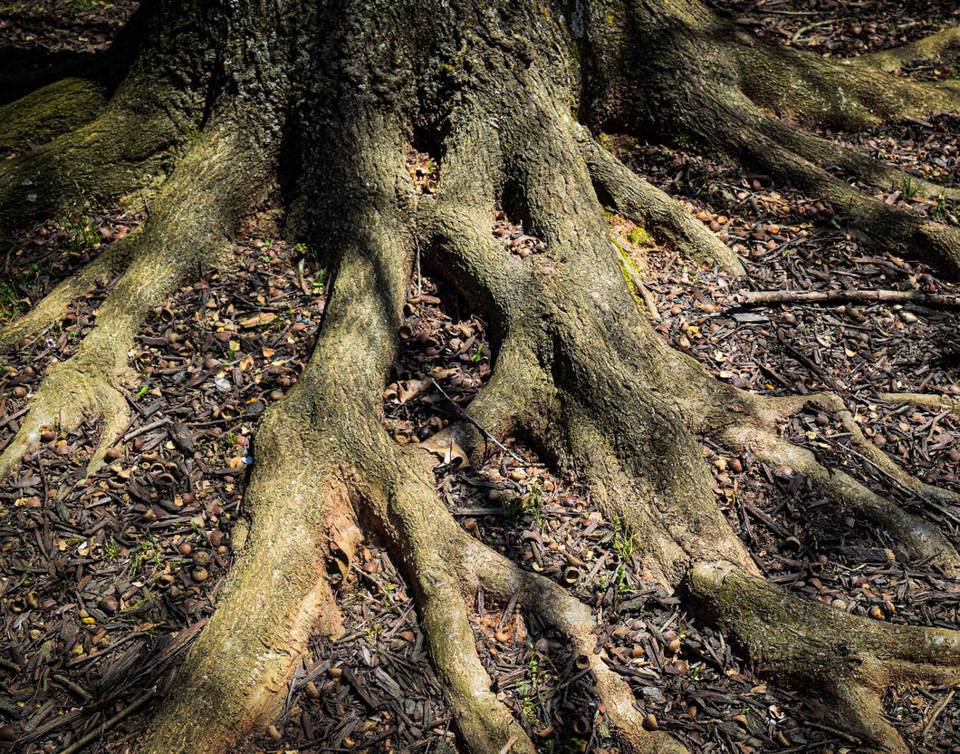 Rooted and Ready ☼ Soul of Nature {Photo Print} Photo Print New Dawn Studios