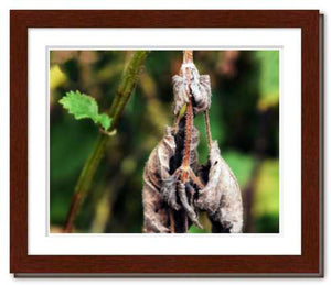 Slow Dancing ☼ Nature of Love / Soul of Nature {Photo Print} Photo Print New Dawn Studios 8x10 Framed