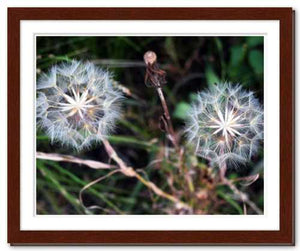 Together in Whatever World ☼ Soul of Nature {Photo Print} Photo Print New Dawn Studios 11x14 Framed