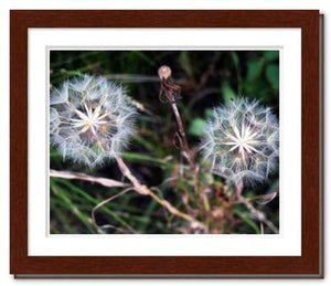 Together in Whatever World ☼ Soul of Nature {Photo Print} Photo Print New Dawn Studios 8x10 Framed