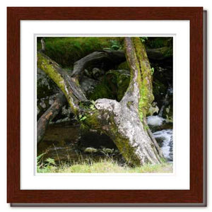 Upraised ☼ Faithscapes & Soul of Nature {Photo Print} Photo Print New Dawn Studios 8x8 Framed