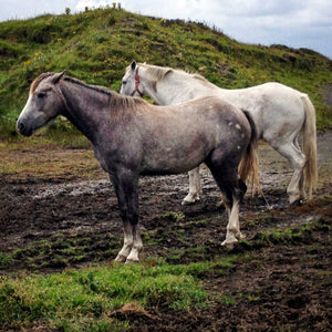 Working Together ☼ Soul of Ireland Horses {Photo Print} Photo Print New Dawn Studios