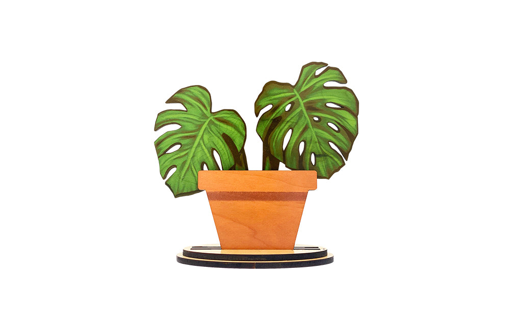 MERRY MONSTERA MINI SET