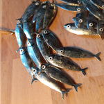 Load image into Gallery viewer, Mini Swirl of Silver Mackerel - Luvit!