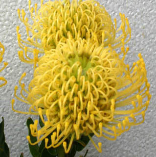 Hygold Pincushion