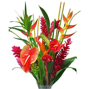 12 Month Membership / 12 Tropical Stems plus Foliage