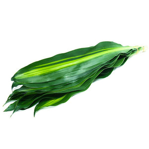Dracaena Massangeana Leaves (5 Pack)