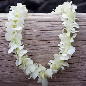 White Orchid Lei (10-Pack)