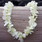 White Orchid Lei (50-Pack)