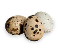 Coturnix quail eggs feeder for reptiles