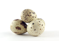 Organic fertile Quail eggs Reptanicals