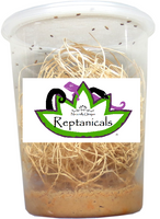 Reptanicals Melanogaster fruit flies for reptiles fruit flies for sale