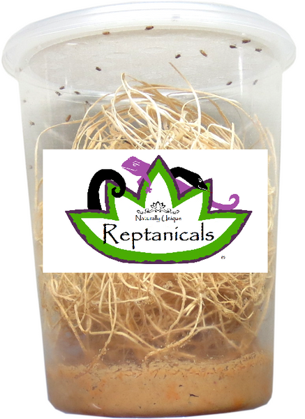 Reptanicals Hydei Flightless Fruit Fly culture for reptiles fruit flies for sale