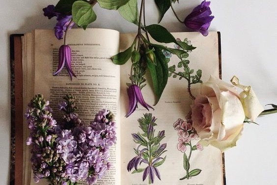 Everything you need to know about pressed flowers