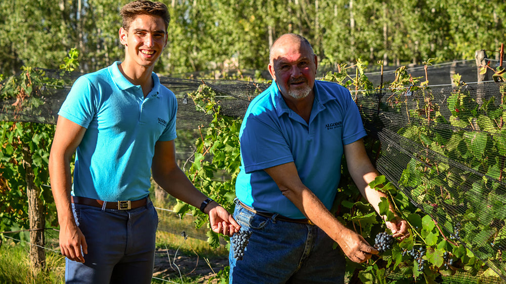 From Vine to Wine, Algodon's 2021 Harvest