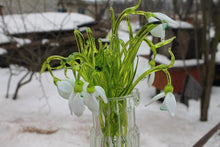 Load image into Gallery viewer, Glass Flower Snowdrop Glass handblown