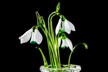 Load image into Gallery viewer, Flower Snowdrop  set of three glass snowdrops and crystal vase  mothers day gift Glass Flower Snowdrop birth flower