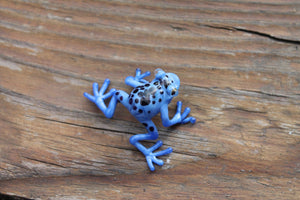 Callidryas tree frog Blown Glass Frog Sculpture poison dart frog  lampwork boro toy Glass Frog Miniature Agalychnis callidryas