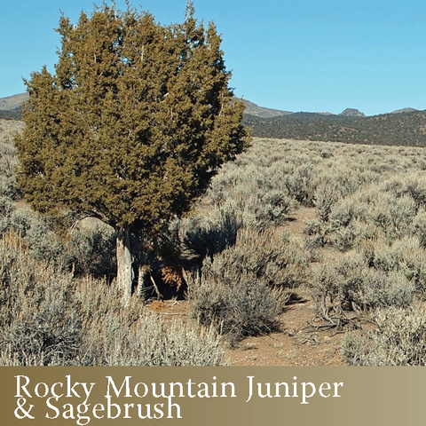 1015 - Rocky Mountain Juniper & Sagebrush Co-distillate (Juniperus scopulorum Sarg. & Artemisia tridentata subspecies wyomingensis)