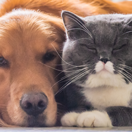 Dog and cat laying side by side